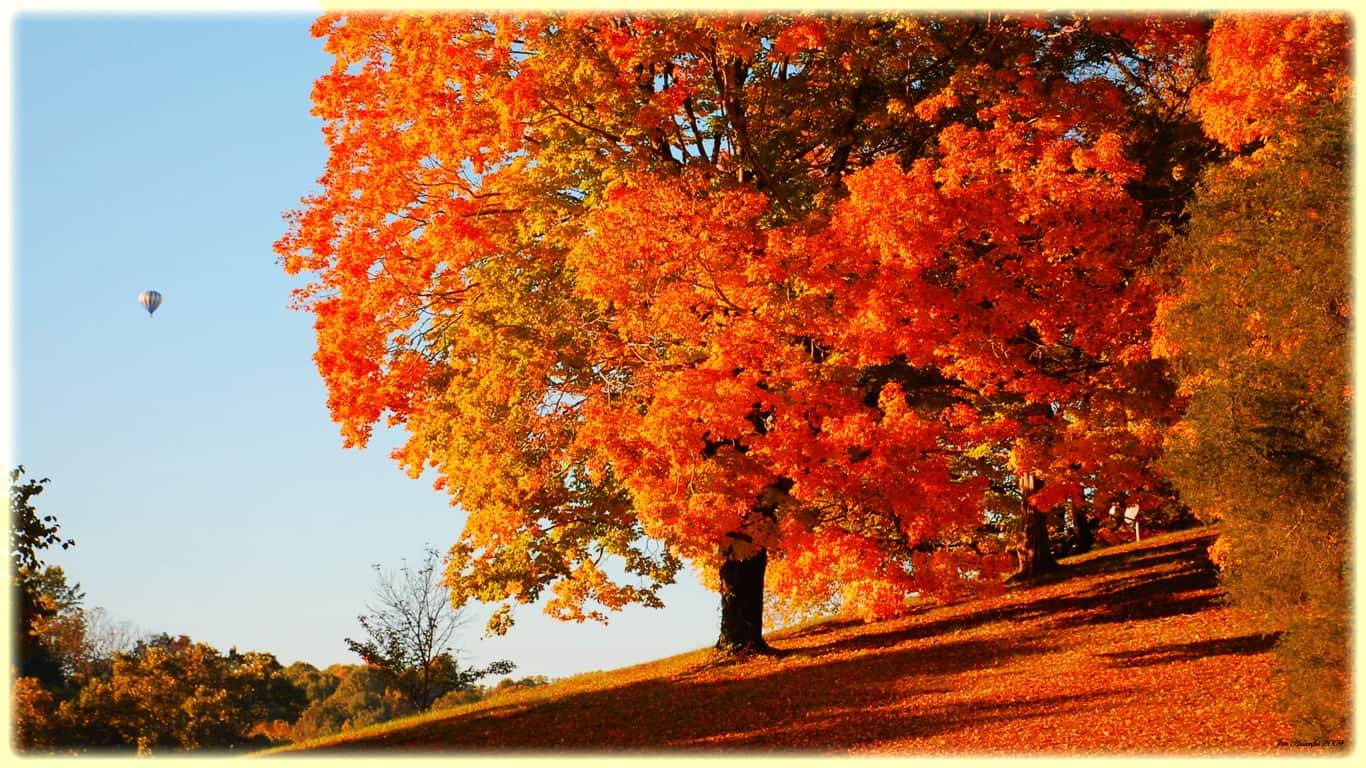 sunset-trees-orange-at-fall-desktop-hq